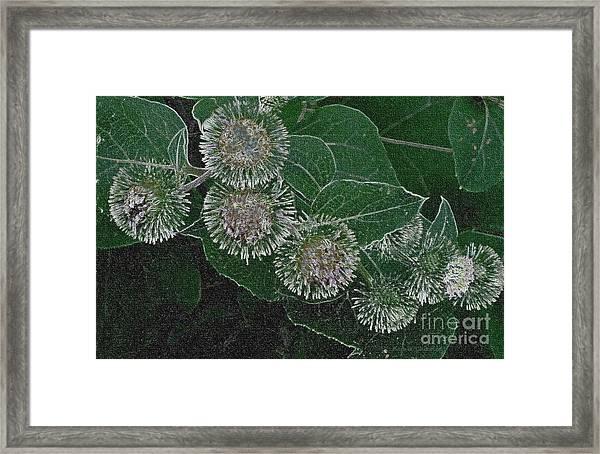 Dark Thistles Framed Print