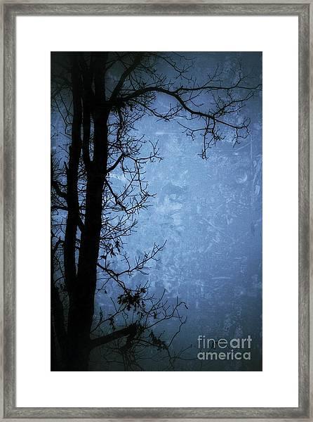Dark Tree Silhouette  Framed Print