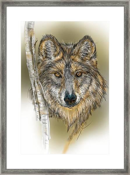 Dark Wolf With Birch Framed Print