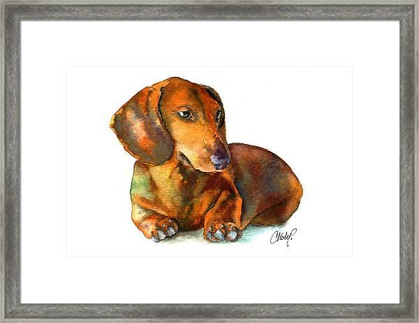 Daschund Puppy Dog Framed Print