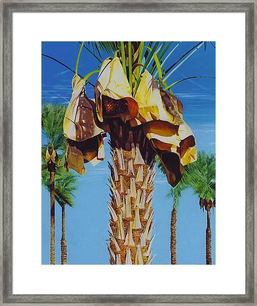 Date Palm Framed Print