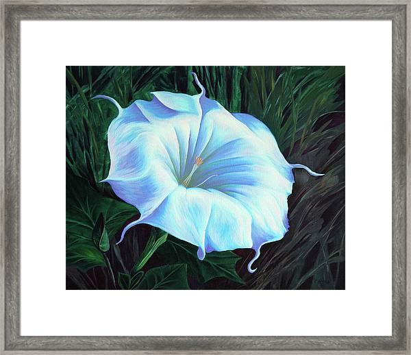 Datura Flower Framed Print