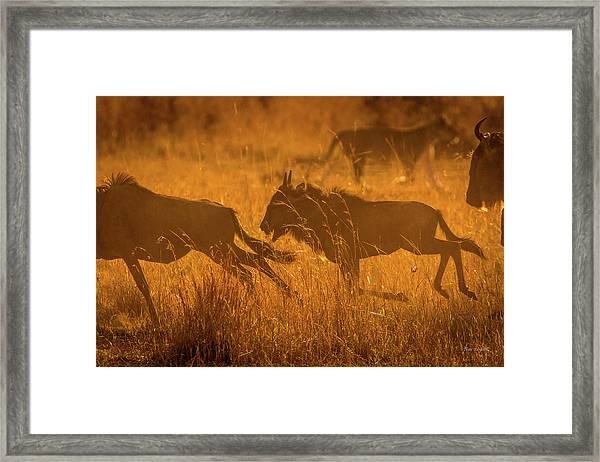 Dawn Chase Framed Print