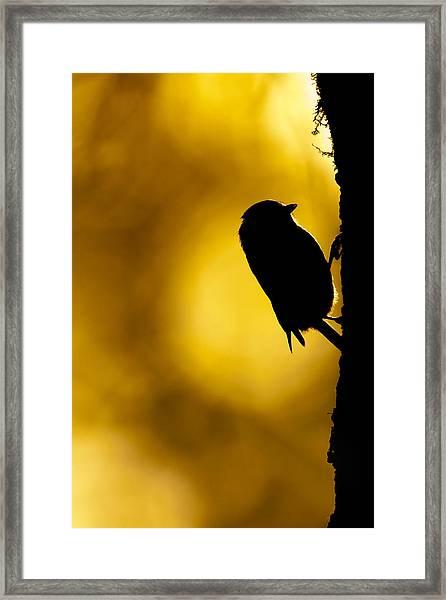 Dawn Climber Framed Print