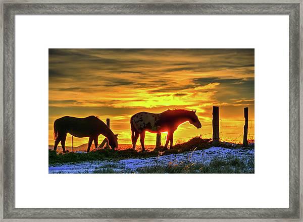 Dawn Horses Framed Print