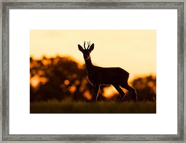 Dawn Roe Framed Print