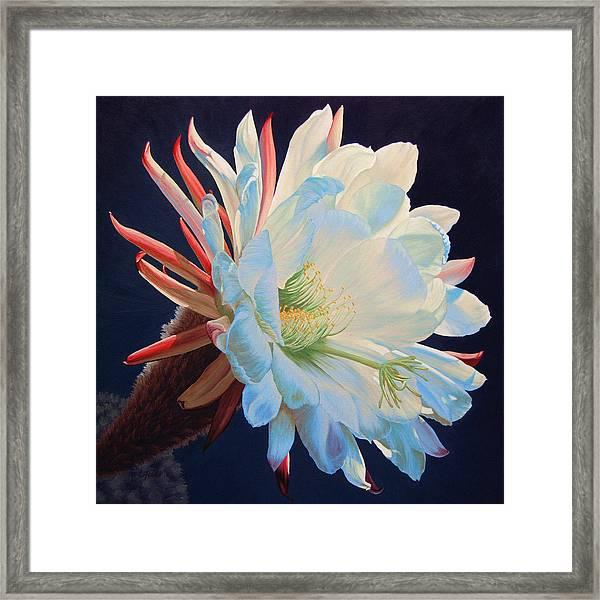 Daybreak Delight Framed Print