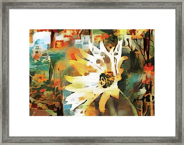 Daydreaming Daisies Framed Print