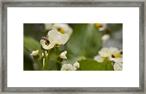 Days Work Framed Print