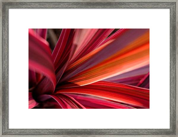 Dazzler Framed Print