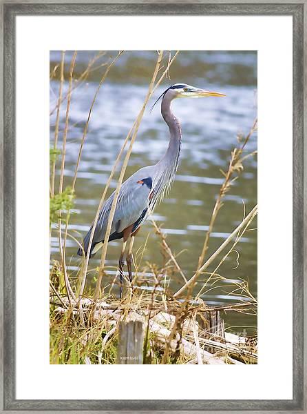 De Leon Springs Blue Framed Print