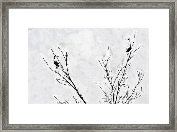 Dead Creek Cranes Framed Print