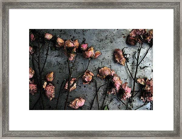 Dead Roses 5 Framed Print