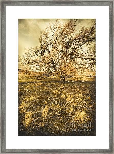 Dead Tree In Seasons Bare Framed Print