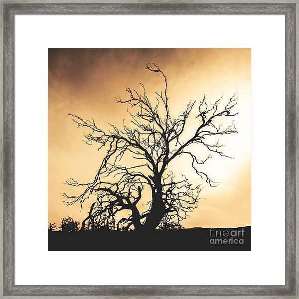 Dead Tree Silhouette Framed Print