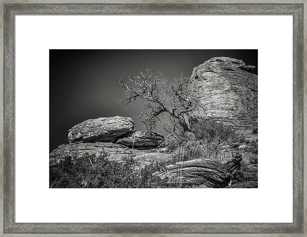 Dead Tree With Boulders Framed Print by Joseph Smith