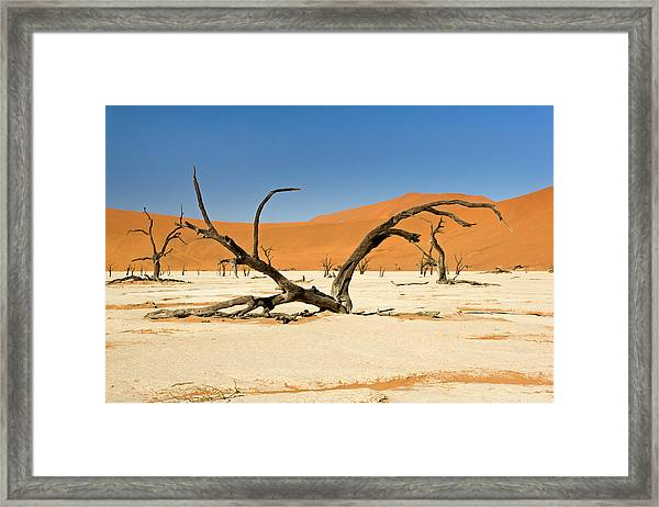 Deadvlei With Tree Framed Print