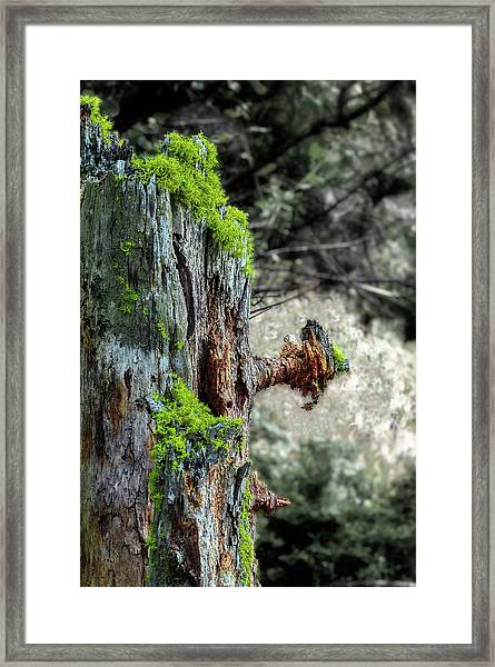 Death And Life Along The Path Framed Print