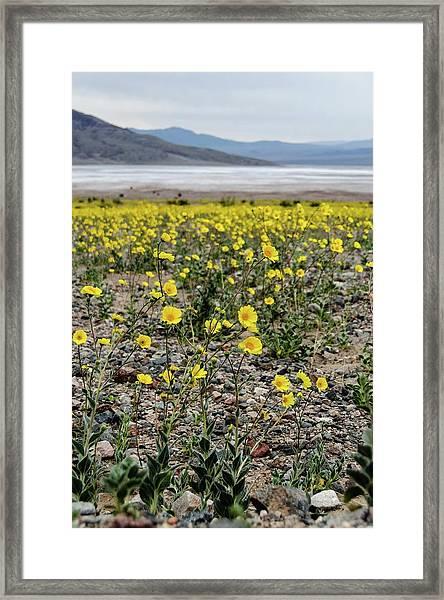 Death Valley Super Bloom Framed Print