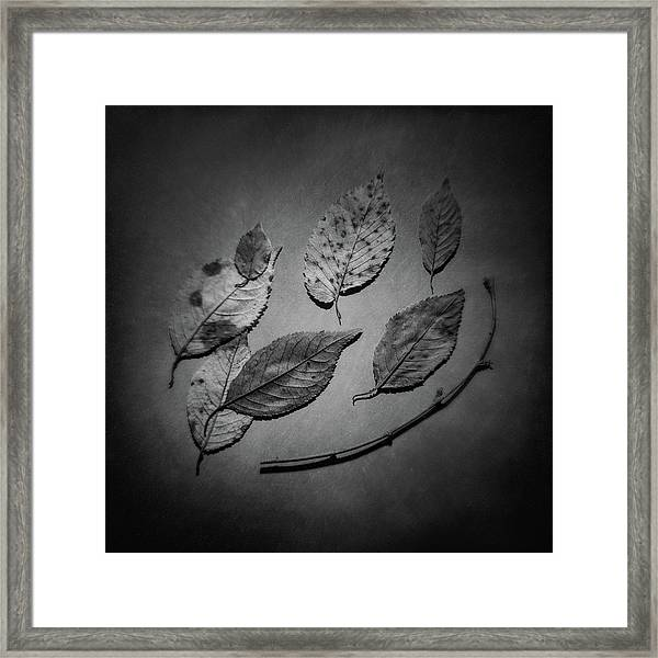 Decaying Leaves Framed Print