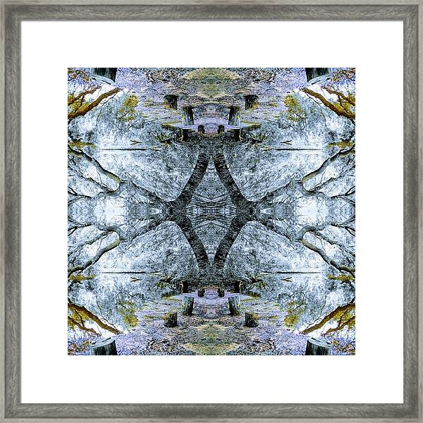 Deciduous Dimensions Framed Print