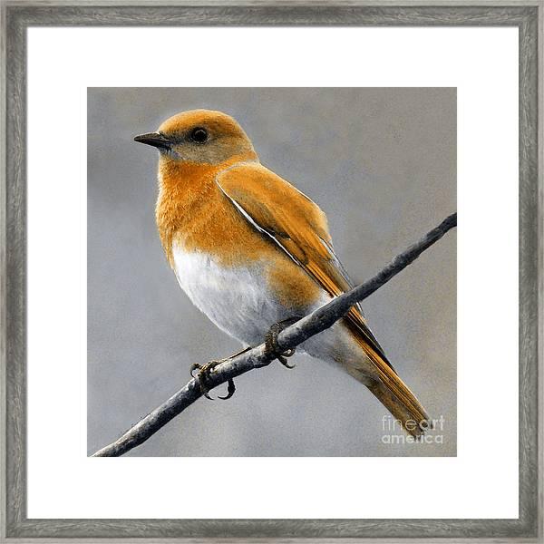 Framed Print featuring the mixed media Decorative Bird Mixed Media E11817 by Mas Art Studio