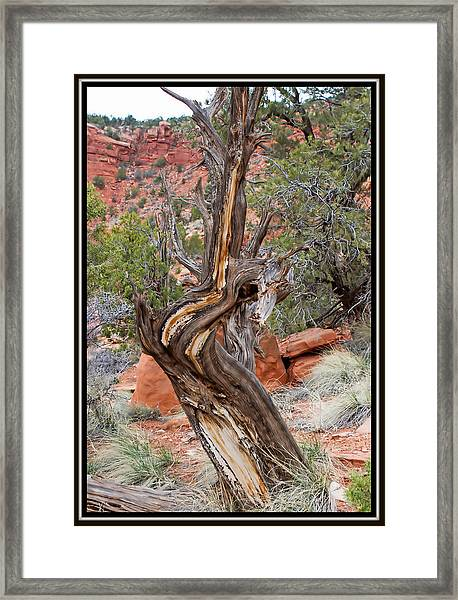 Decorative Dead Tree Framed Print