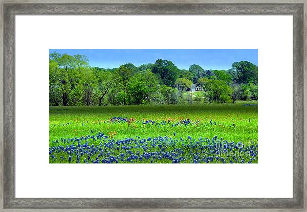 Decorative Texas Homestead Bluebonnets Meadow Mixed Media Photo H32517 Framed Print