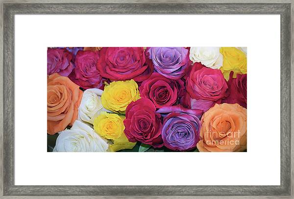 Decorative Wallart Brilliant Roses Photo B41217 Framed Print