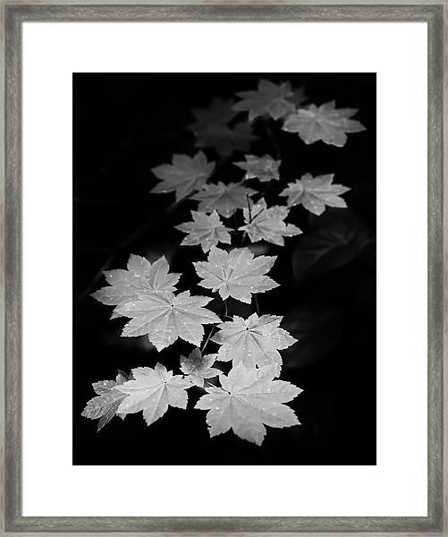 Deep Forest Maple Framed Print