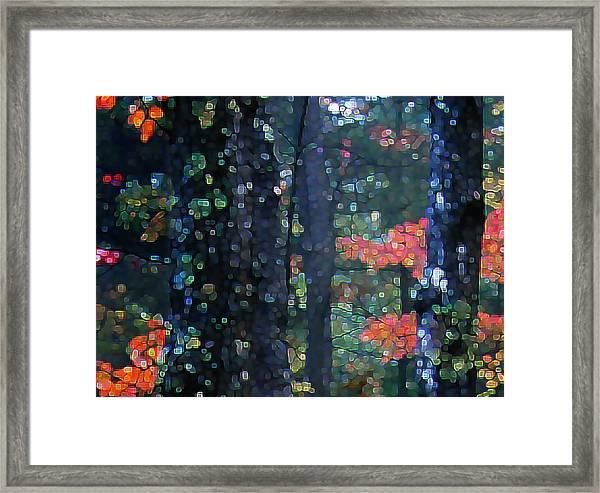 Deep Woods Mystery Framed Print