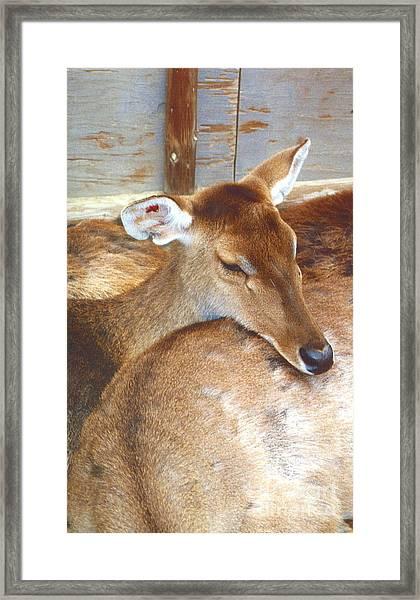 Deer Framed Print by Andrea Simon
