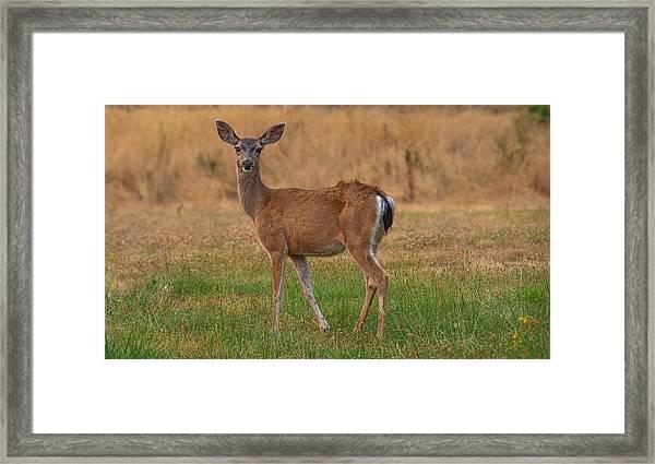 Deer At Sunset Framed Print