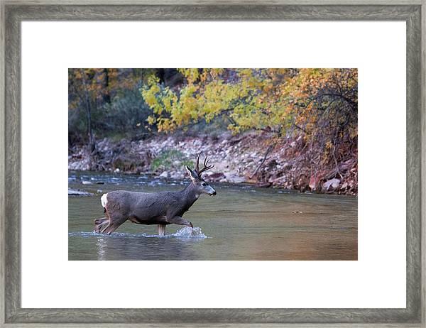 Deer Crossing River Framed Print
