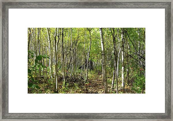 Deer Hide Framed Print