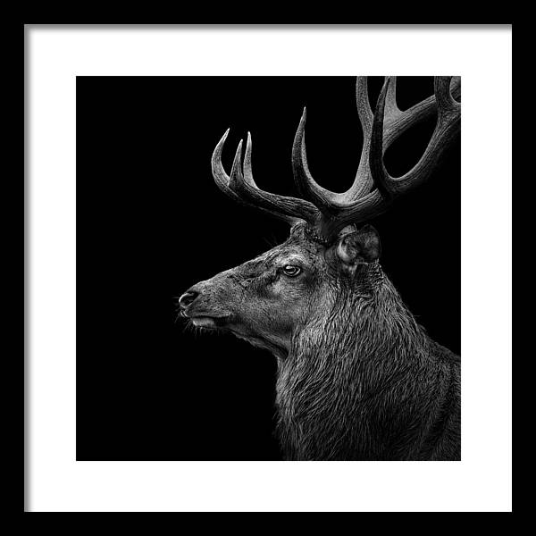 Deer Head Framed Art Prints Fine Art America