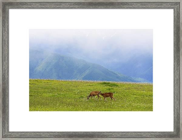 Deer In Browse Framed Print