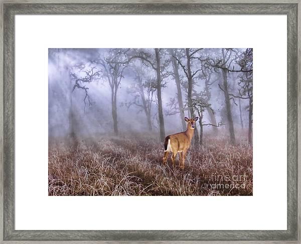 Deer Me Framed Print