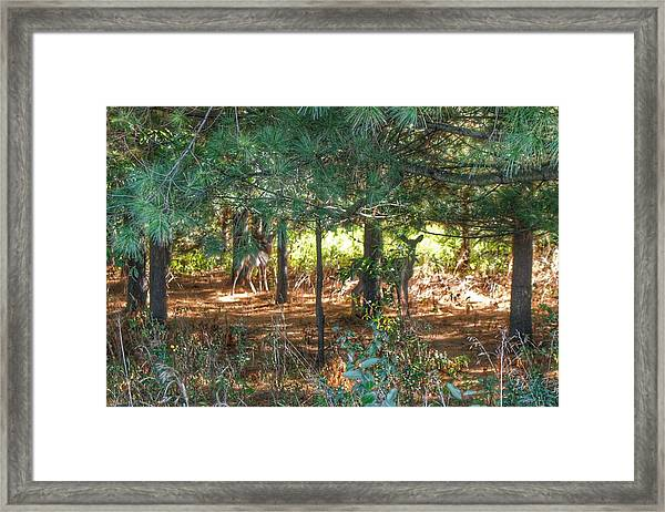 1011 - Deer Of Croswell I Framed Print