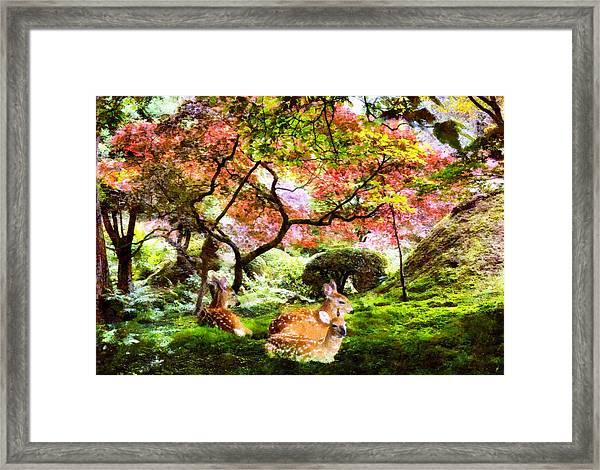 Deer Relaxing In A Meadow Framed Print