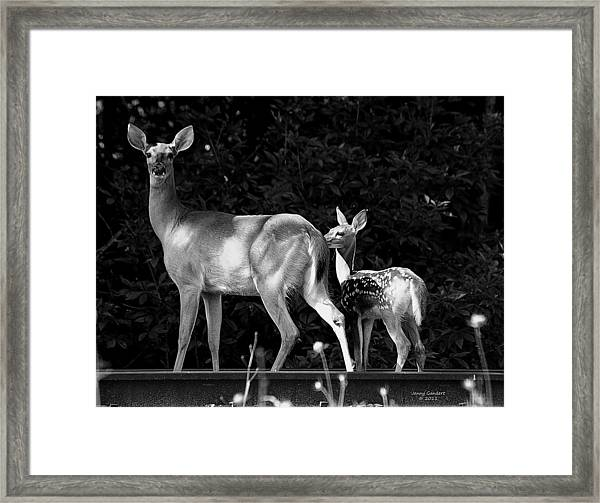 Deer Tracks Framed Print