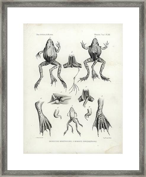 Framed Print featuring the drawing Deformed Frogs - Historic by Joseph Huet