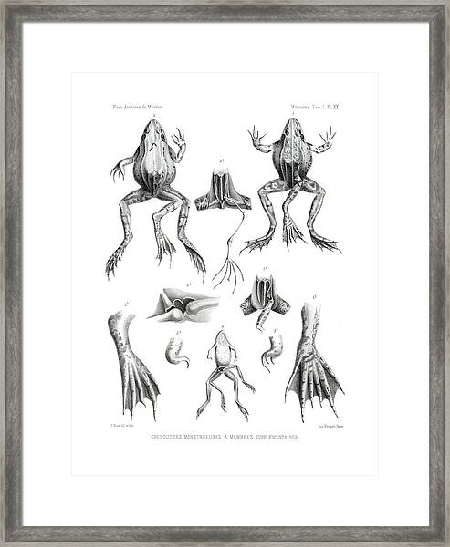Framed Print featuring the drawing Deformed Frogs by Joseph Huet