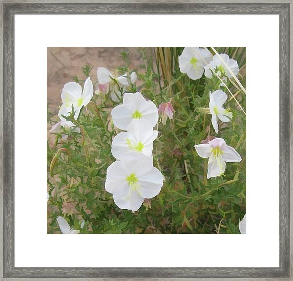Delicate Desert Bloom - Death Valley Framed Print