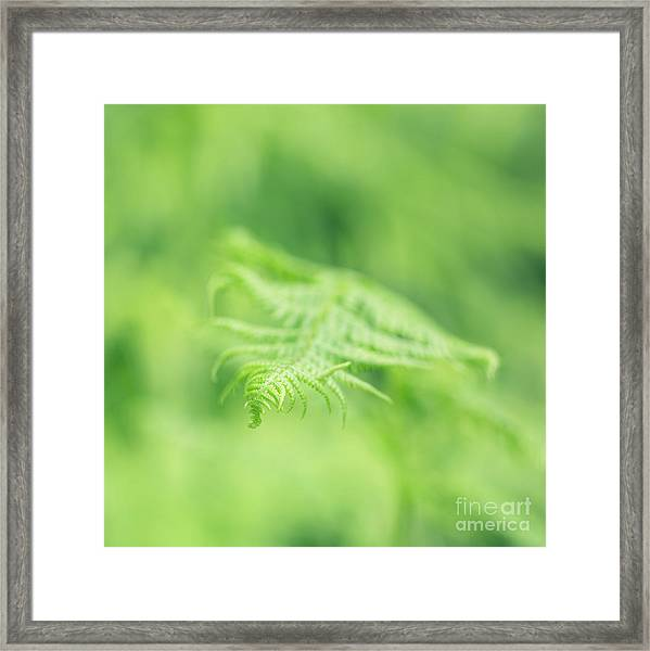 Delicate Fern - Hipster Photo Square Framed Print