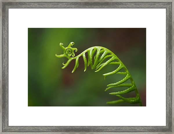 Delicate Fern Frond Spiral Framed Print