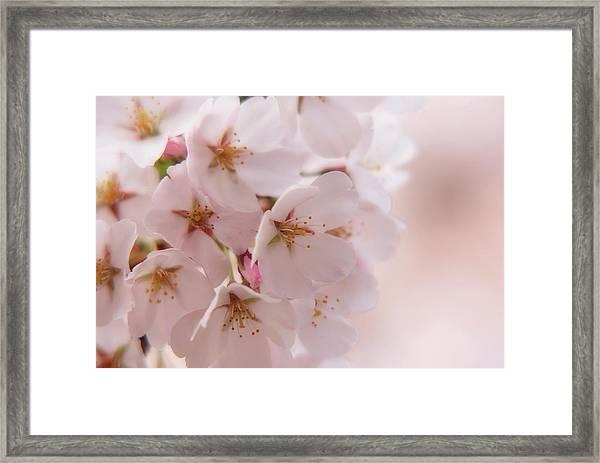Delicate Spring Blooms Framed Print