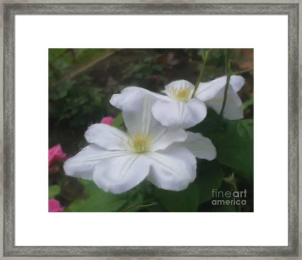 Delicate White Clematis Pair Framed Print