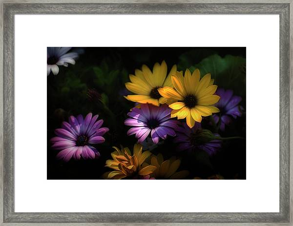Delightful Daisies Framed Print
