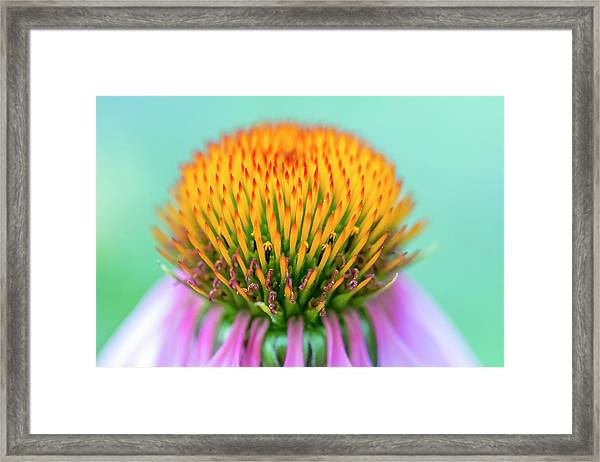 Depth Of Field Framed Print